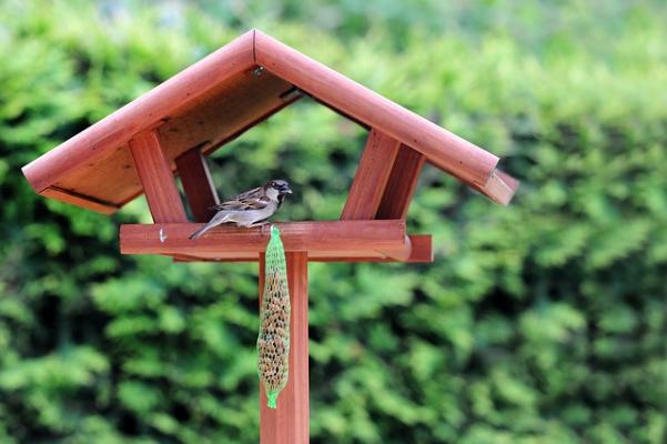 Kuşlara Yem Evi Yapmaya Ne Dersiniz?