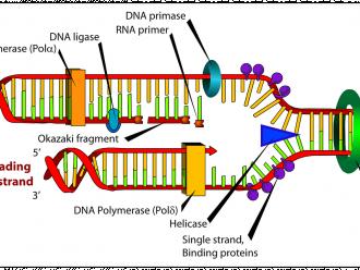 Dünya DNA Günü Hakkında Bilmeniz Gereken 10 Madde