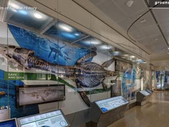 Uluslararası Müze gününde Çocuklar İçin Harika Dijital Müzeler