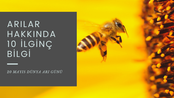 Arılar hakkında 10 ilginç bilgiyle Dünya Arı Günü'nü kutluyoruz